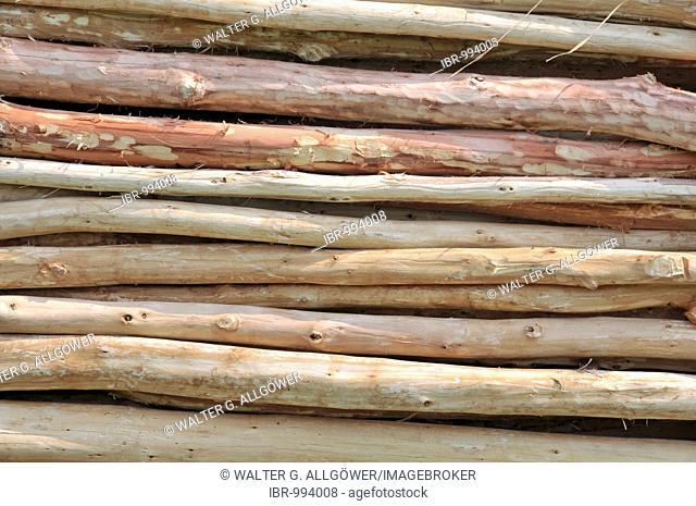 Eucalyptus trunks (Eucalyptus), stacked, Greater St. Lucia Wetlands Park, South Africa