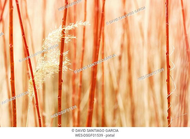 Spain, Cuenca, Canamares, detail of willows