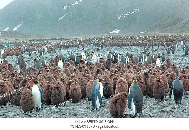 Animal, Penguin, Island, Geórgia do Sul, Antarctica