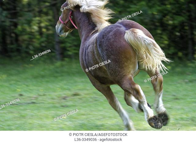 Farm horse. Poland
