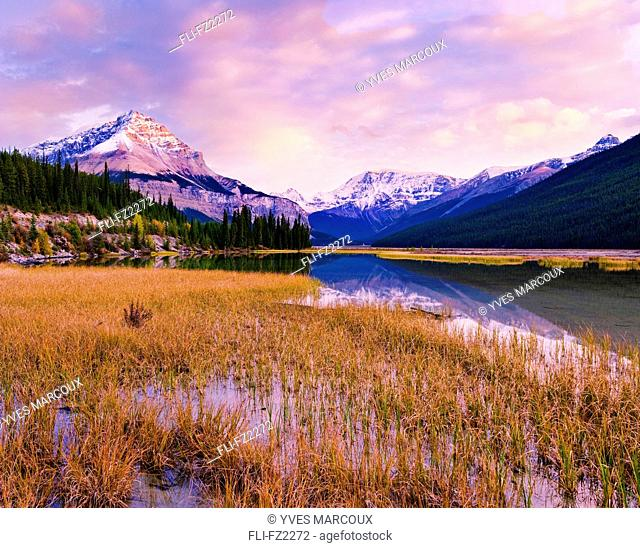 Tangle Ridge and Mount Kitchener at sunset reflected in pond near Beauty Creek Hostel, Jasper National Park, Alberta