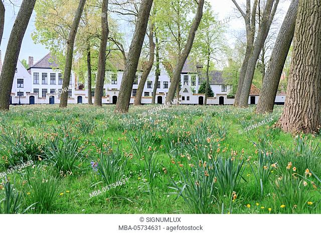 Belgium, West Flanders, Bruges, beguinage with inclined trees