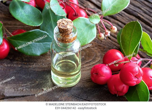 A transparent bottle of essential oil with fresh wintergreen leaves and berries