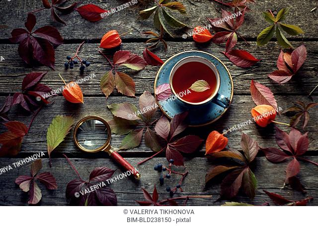 Fallen leaves and berries on wooden table with tea and magnifying glass