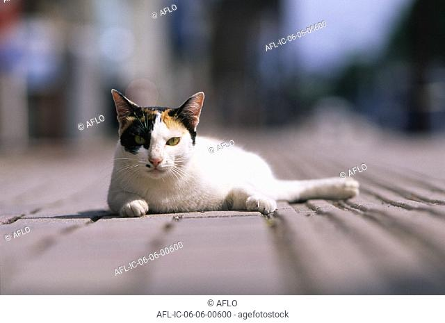 Relaxed cat lying down