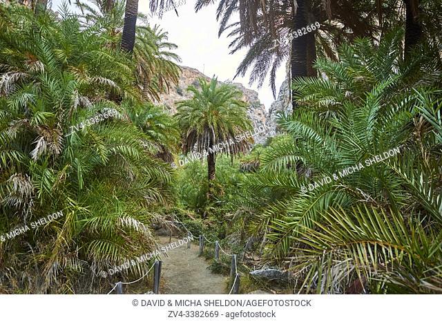Landscape of the Preveli palmgrove, Crete, Greece, Europe