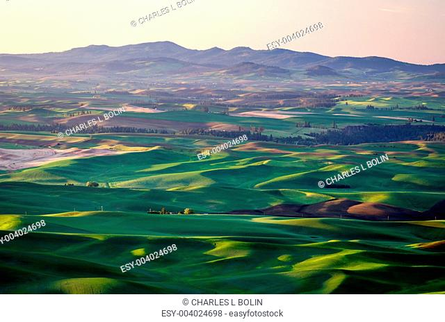 Rolling hills and the Palouse range, seen from Steptoe Butte State Park, Washington, USA