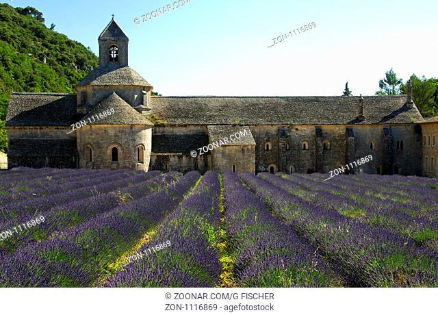 Lavendelfeld an der Abtei Notre-Dame, Zisterzienserkloster Sénanque, Gordes, Provence, Frankreich/ Lavender fields at the Cistercian abbey Notre-Dame, Sénanque