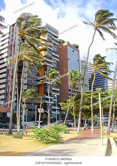 big palm trees at ceara beach park