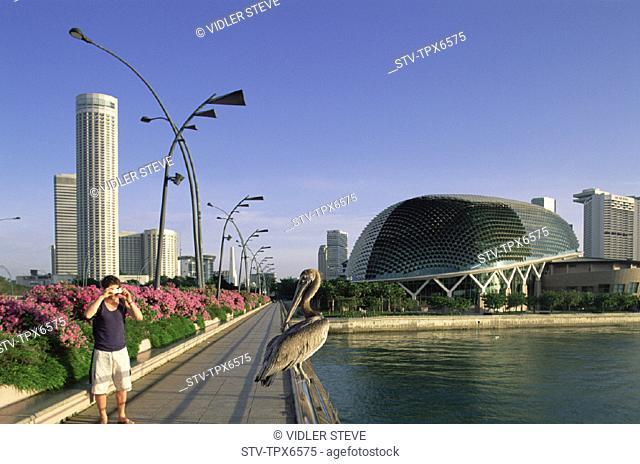 Asia, Bird, City, Convention centre, Flowers, Holiday, Landmark, Pelican, Photography, Singapore, Asia, Skyline, Suntec, Tourism