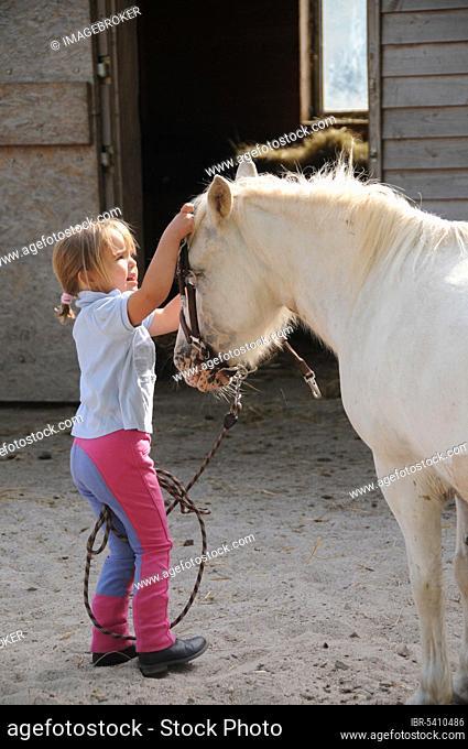 Little girl and shetland pony, halter, shetland pony, shetty, white horse