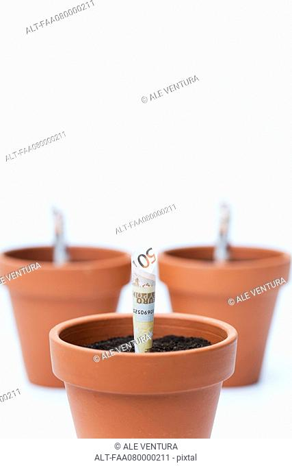 Fifty euro banknotes planted in flower pots
