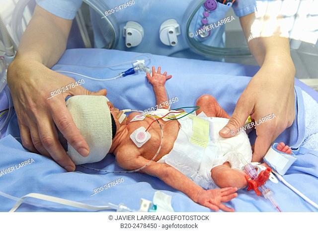 Nurse holding newborn baby in incubator in neonatal intensive care unit, Hospital Donostia, San Sebastian, Basque Country, Spain