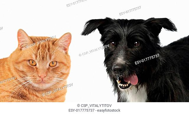 Cat and dog portraits