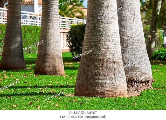 Palm tree trunk background