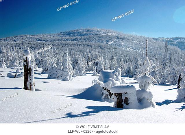 Plesny Mountain, Sumava National Park, the Southwestern Bohemia, Czech Republic
