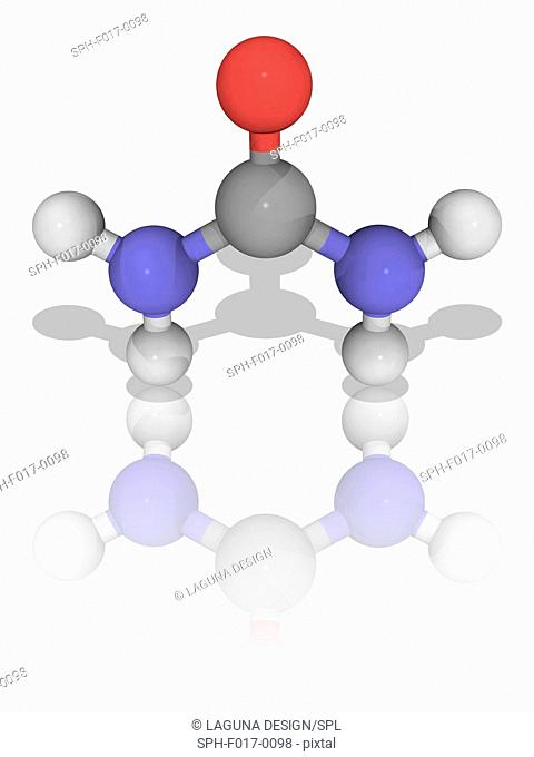 Urea. Molecular model of the organic compound urea (C.H4.N2.O), which plays an important role in the metabolism of nitrogen-containing compounds