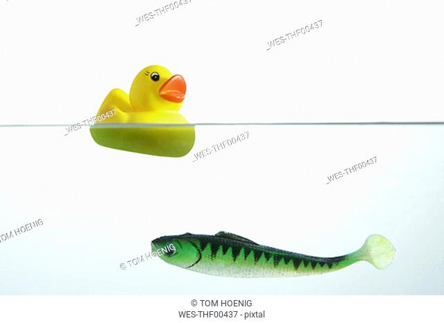 Yellow rubber duck and plactic fish in water, side view