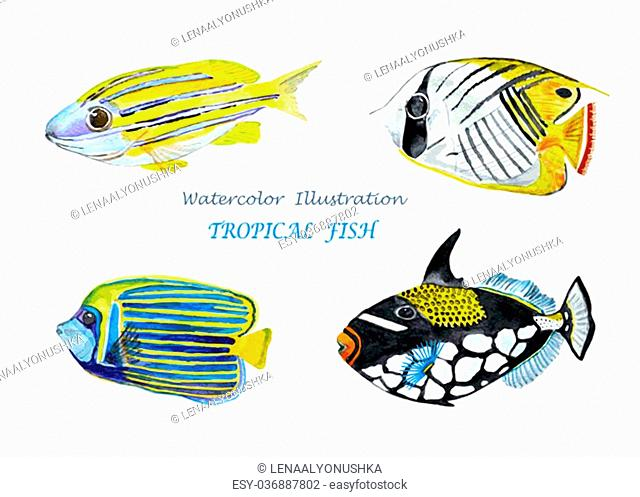 Watercolor tropical fish. Hand painted realistic illustration