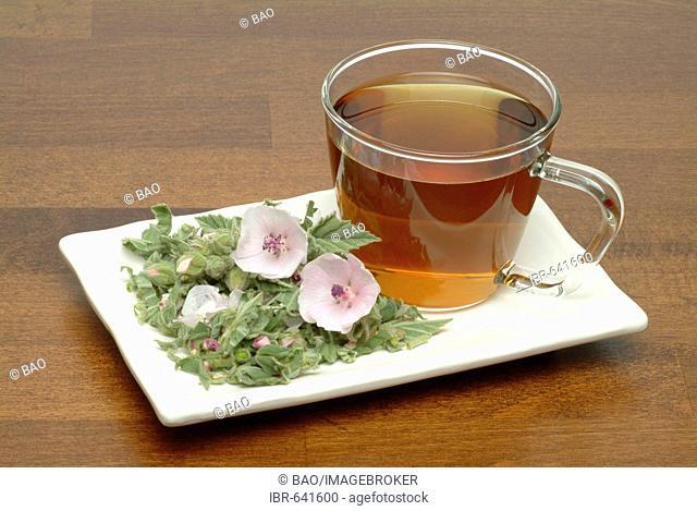 Common Marshmallow or Marsh Mallow (Althaea officinalis), herbal tea