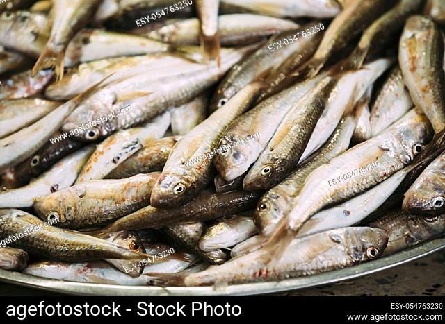 Fresh Mullus Fish On Display On Ice On Fishermen Market Store Shop. Seafood Fish Background. Top View. Mullus Is A Subtropical Marine Genus Of Perciform Fish Of...