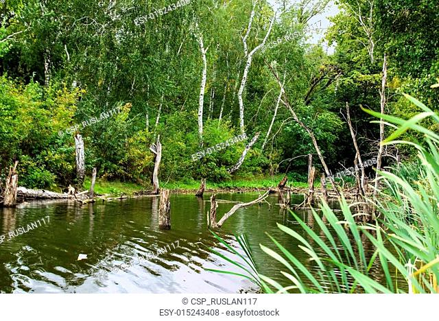 Bald Trees reflecting in the water in a swamp on a warm summer day