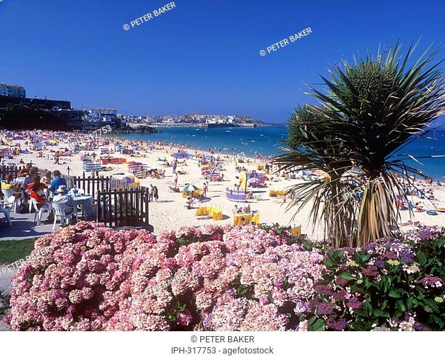 Palm trees overlooking Porthminster Beach at the popular Cornish resort of St Ives