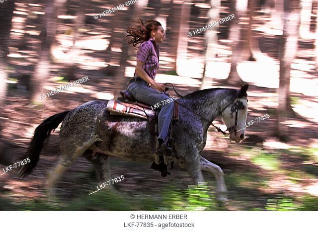 Horserider galloping through the woods, Upper Austria, Austria