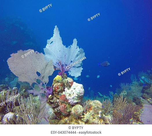 Beautiful Corals in Utila, Honduras
