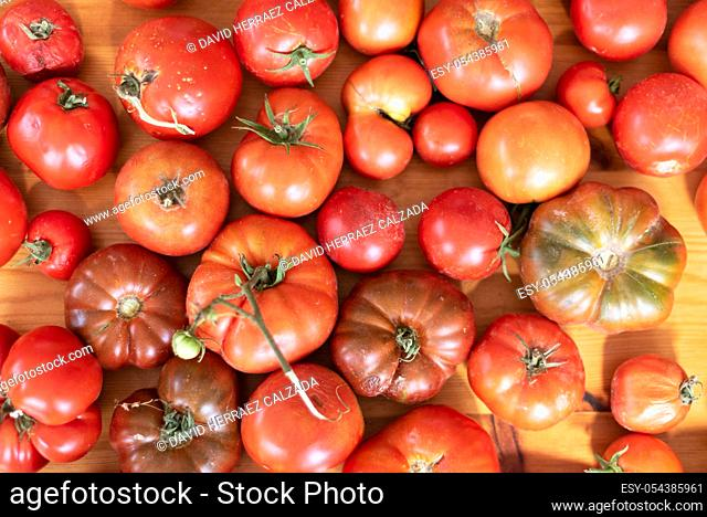 Raw organic vegetables, delicious tomatoes on wooden table