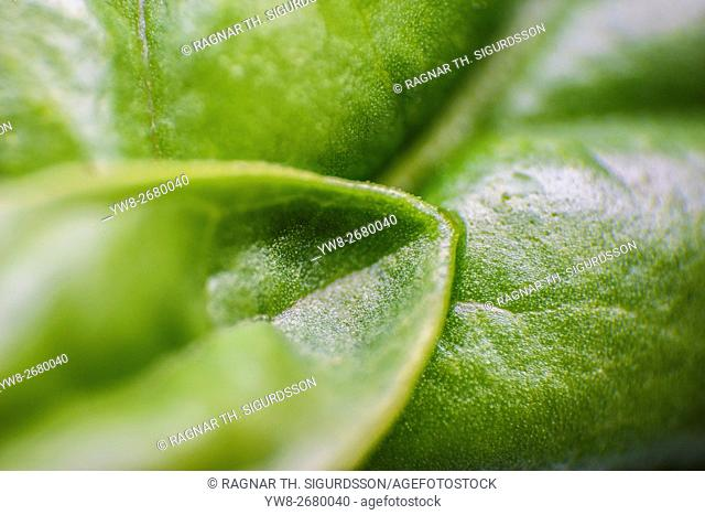Close-up of leaves, Hogland, Finland