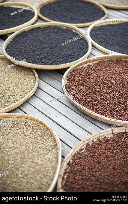 Colorful display of dried up fresh peppercorns, Kampot, Cambodia