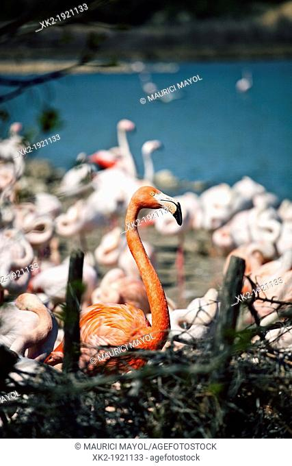 reddish Flamingo