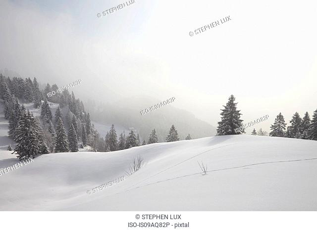 Elevated view of snow covered trees in mist, Brauneck, Lengries, Bavaria, Germany