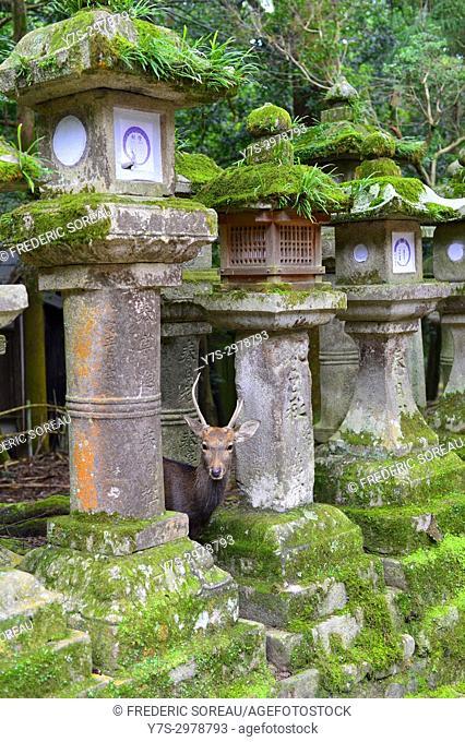 Stone lantern at Kasuga Taisha in Nara, Japan, Asia