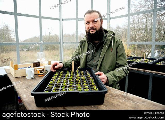 Gardener in grenhouse, checking spinach seedling is nursery pots