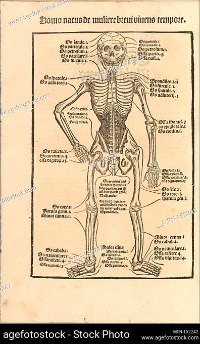 Ortus Sanitatis/ De herbis et plantis/ De Animalibus & reptilibus . Printer: Printed by Johann Prüss the Elder (German, 1480-1510); Date: before 1497; Medium:...