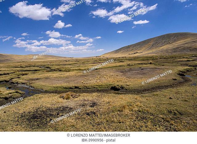 Bolivian plateau Altiplano, La Paz, Bolivia