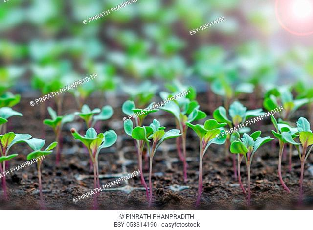 Rows of potted seedlings and young plants, selective focus