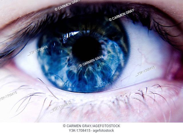 Macro shot of a blue eye