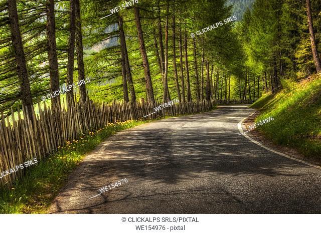 Road with fence, Funes valley, Bolzano province, South Tyrol region, Trentino Alto Adige, Italy, Europe