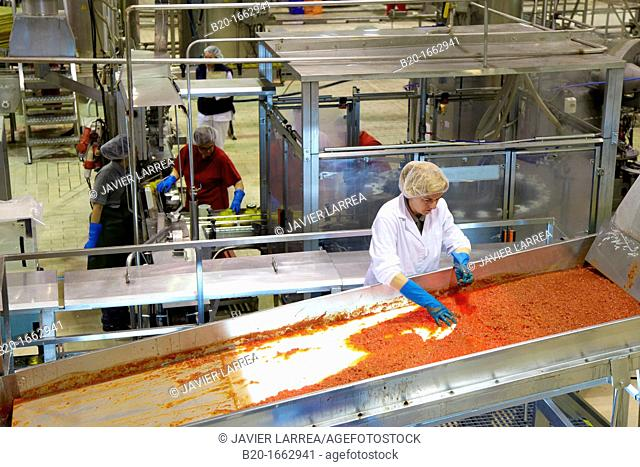 Production line of canned vegetables and beans in glass bottle, Cooked Tomato, Canning Industry, Agri-food, Navarra, Spain