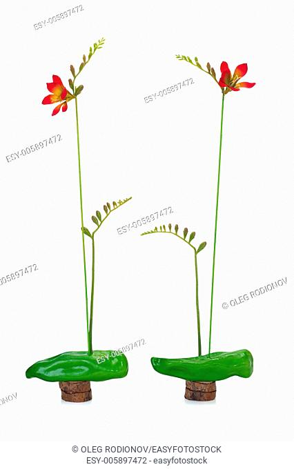 abstract composition of freesia and sweet green pepper on a wooden stand isolated on white background