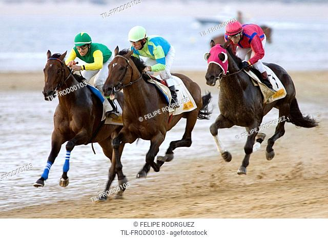 Thoroughbred horses compete at sea shore with green horizon of Doana National Park and the whole seafront in Sanlucar de Barrameda, Cadiz