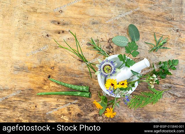 Herb leaf selection of golden thyme, oregano, purple sage, mint and rosemary in flower in a rustic olive wood mortar with pestle, isolated on wooden background