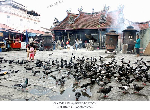 Pigeons on the floor near a sacred tree and a chinese temple, Goddess of Mercy Temple, UNESCO World Heritage Site, Georgetown, Penang Hill
