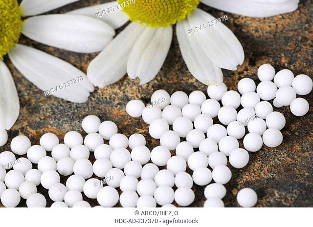 Scented Mayweed globules / Matricaria chamomilla, Matricaria recutita, Chamomilla recutita