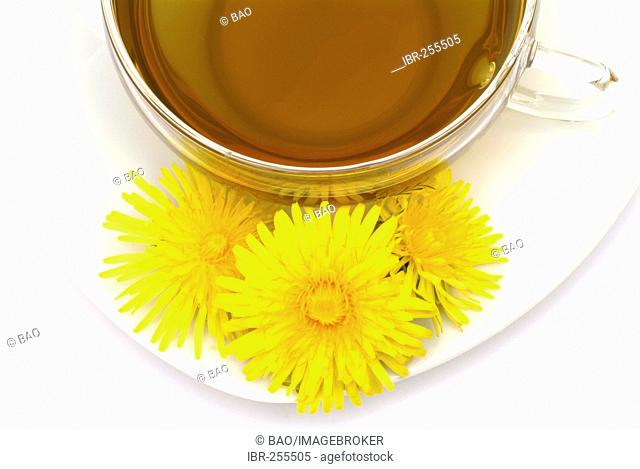 Herb tea made of common Dandelion Taraxacum officinale