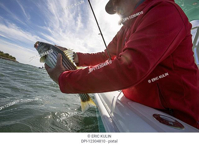 A man holds fish off the edge of a boat on the Atlantic coast; Cape Cod, Massachusetts, United States of America