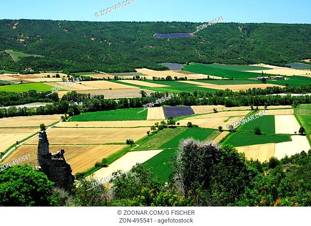 Provence, Frankreich / Field of lavender and other crops, Provence, France